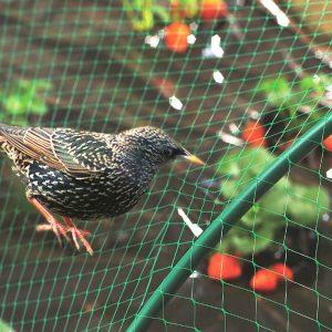 HDPE Anti Bird Net