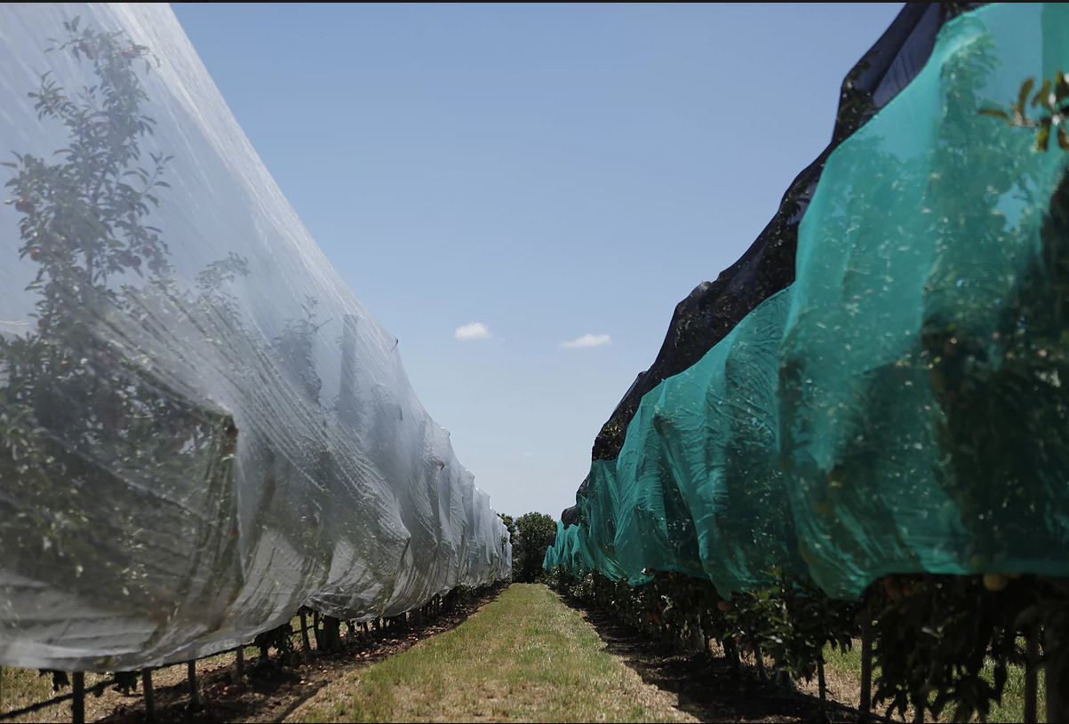Anti-Insects Netting