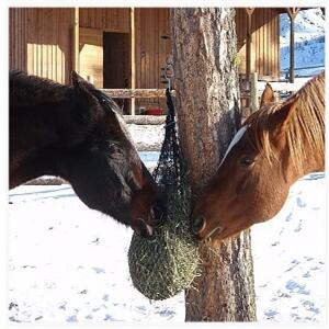 Purely ponies net