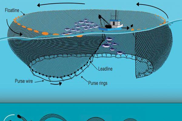 Tuna Cage Nets Purse Seine Fishing