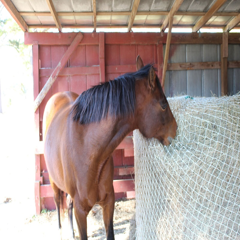 Slow Horse Hay Round Bale Net Feeder
