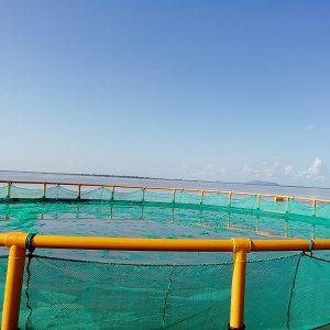 Hapa fish farming PE net