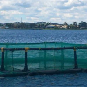 High quality hapa nets