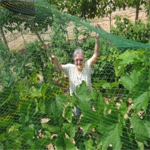 Anti-bird netting for garden protection