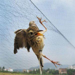 Black nylon mist anti bird net